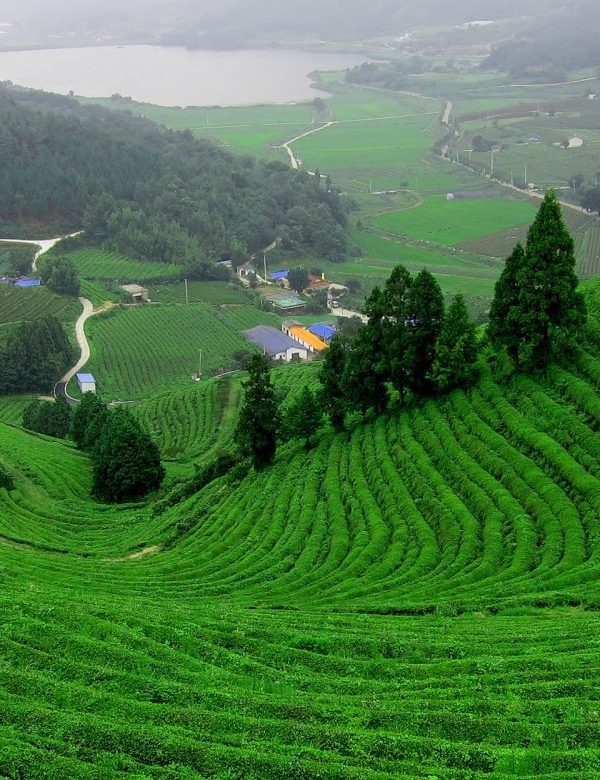 North-East India Tour Package