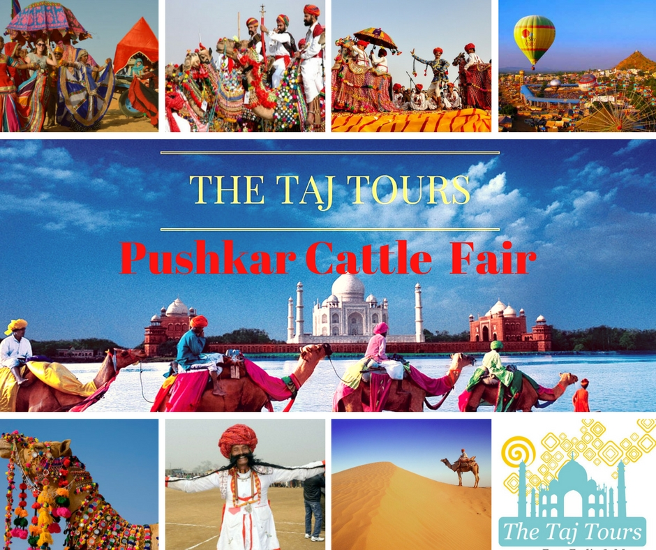 Rajasthan Pushkar Cattle Fair